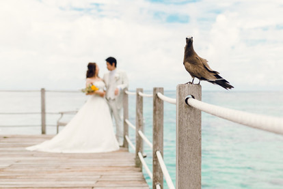 A wedding at Hilton - Moorea, French Polynesia