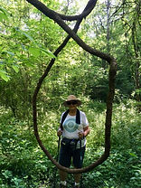 hiker in grape vines.jpg
