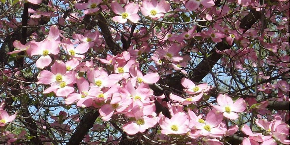 Spring Wildflower Hike (Family Program)
