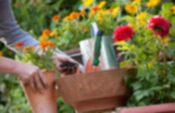 Alice Greenhouse.jpg