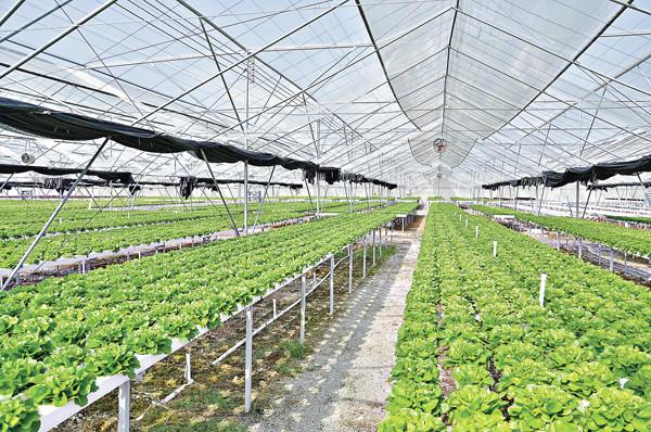 水耕種植對人類的好處