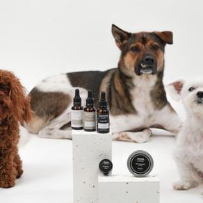 LOP & LOA – The Premium CBD Brand For Pets