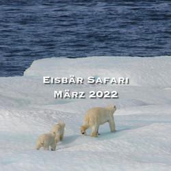 eisbär safari