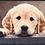 Thumbnail: Wohnmatte Nosy Dog 50x75cm
