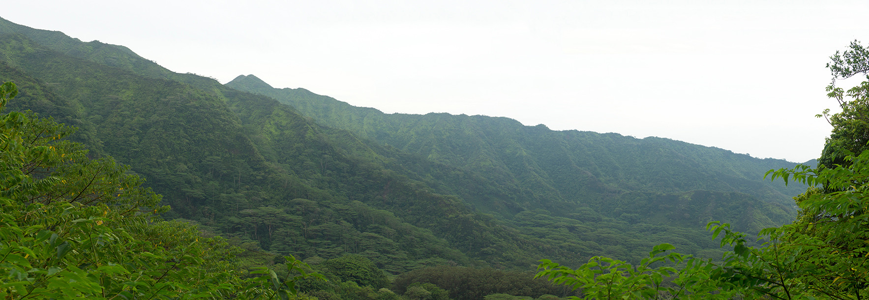 Hawiian Rainforest