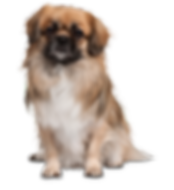 dog_PNG2447.png