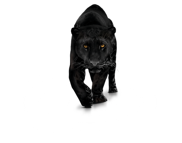 Panther-Transparent-PNG-Photo.png