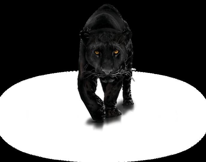 panther-png-png-1400x1100-panther-transp