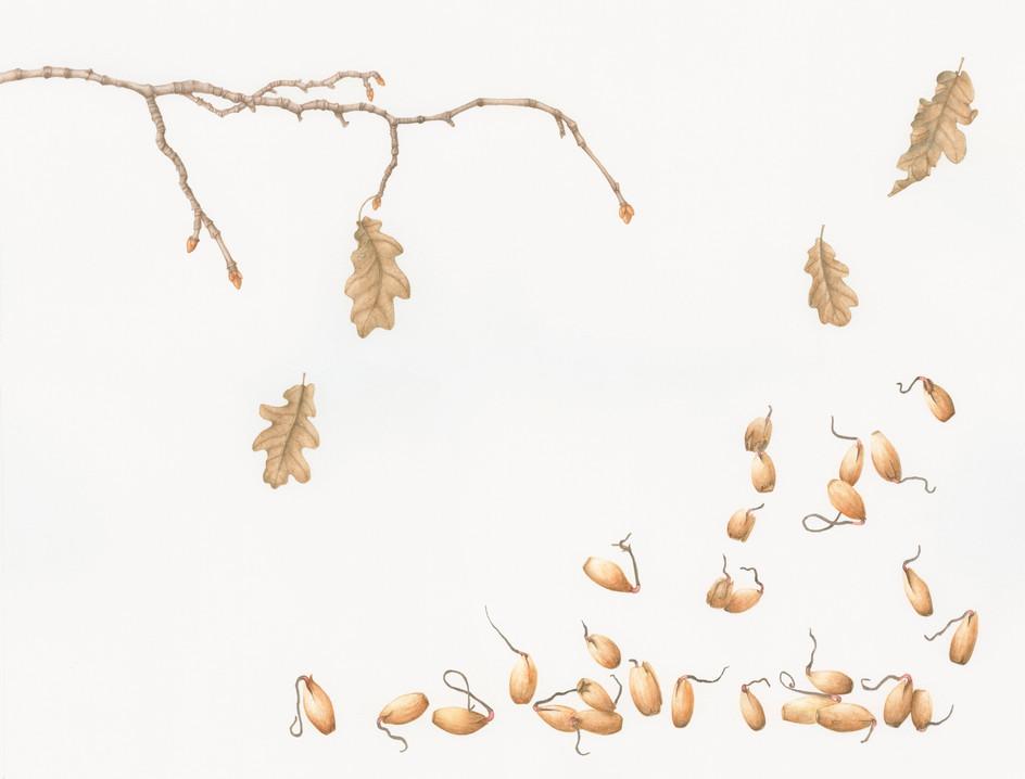 My 28 acorns