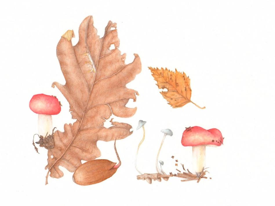 Oak forrest findings