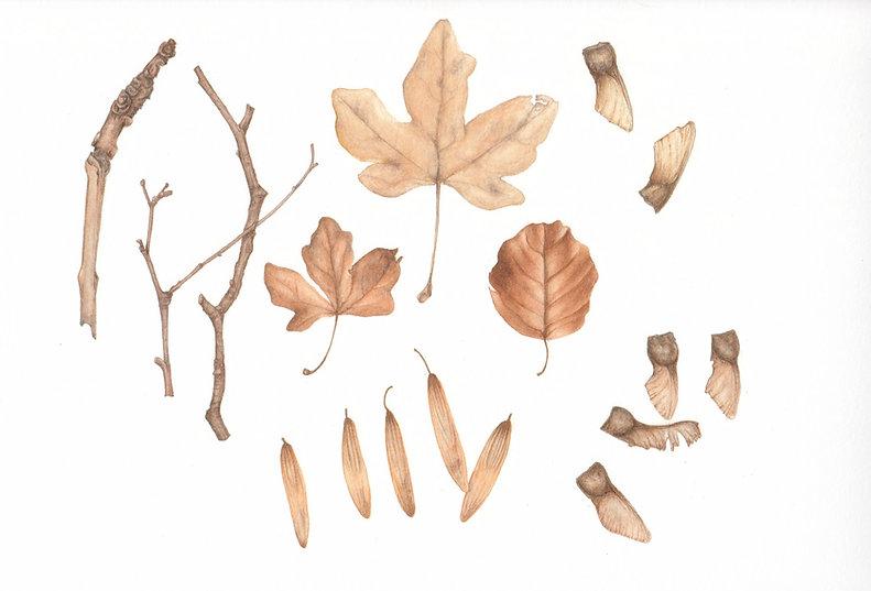 Botanical-art-leaves.jpg