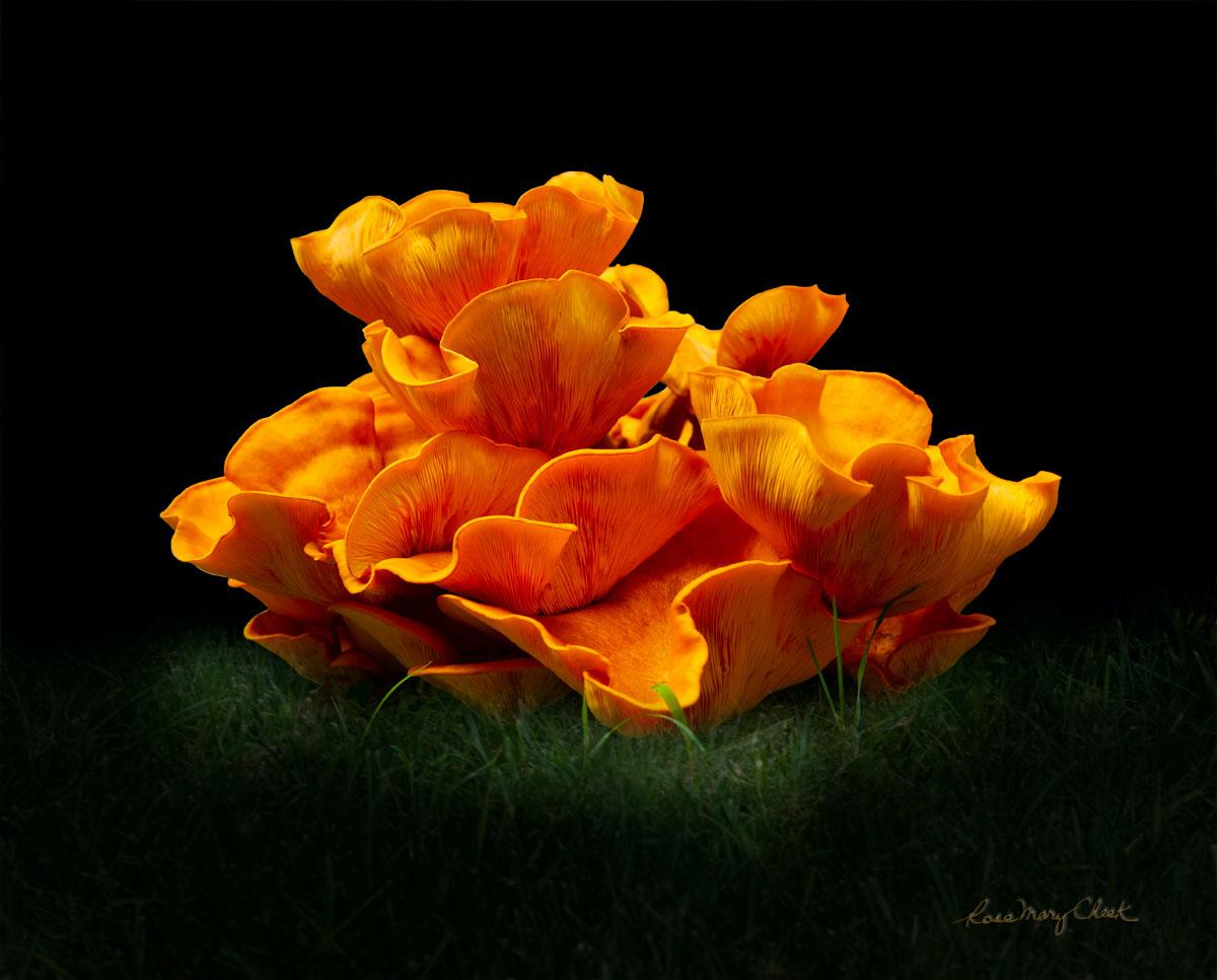 Rose Mary Cheek