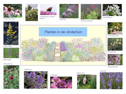 poster planten in de vlindertuin