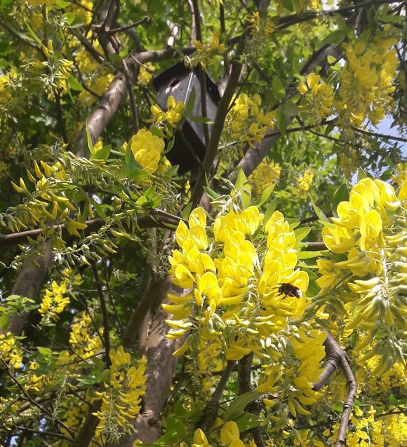Meer bomen, vogels, vlinders en bijen in 10 Arnhemse wijken
