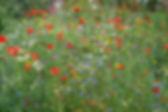 veldbloemen2 (002).jpg