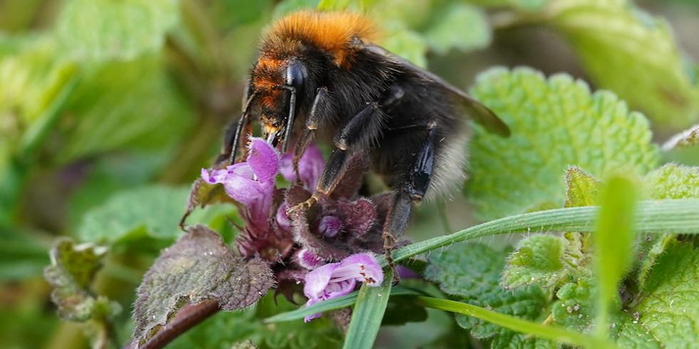 European Bumblebee Conference, EIS