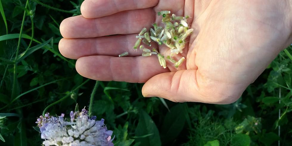 Duurzaam oogsten van bloemenzaden