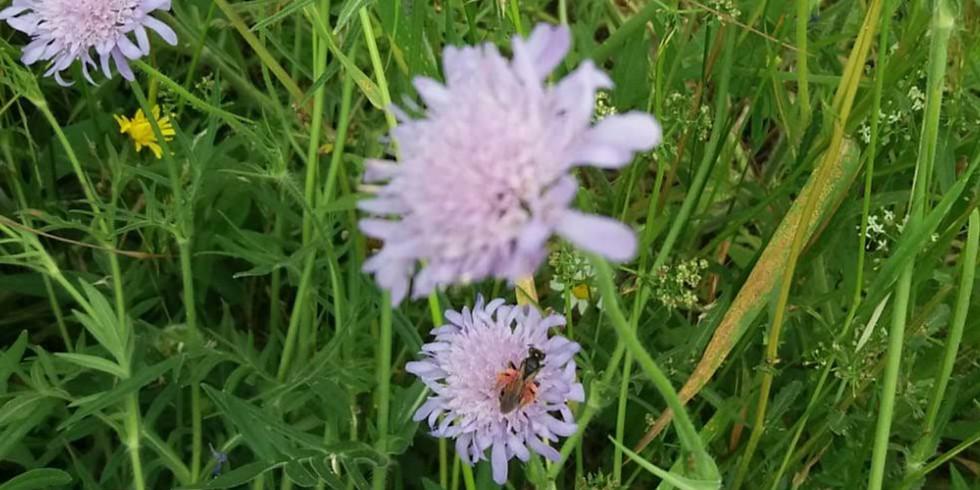 Webinar Dave Goulson; belang van insecten in je tuin