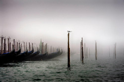 personal works laure jacquemin best venice carnaval photography (80).jpg