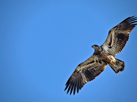 Hawks, Eagles, Tiny Fast Birds, and the Majesty of God