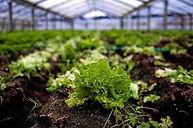 wide_horticultura2_gr_0.jpg