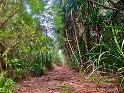 Landscape jungle