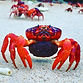 Crab .jpeg