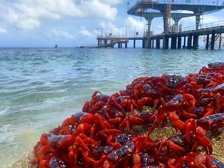 Crabs rock.jpeg