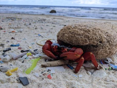 Eco Crab closed till 9th of Jan