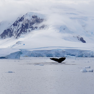 10 Surprises From Antarctic Expeditions