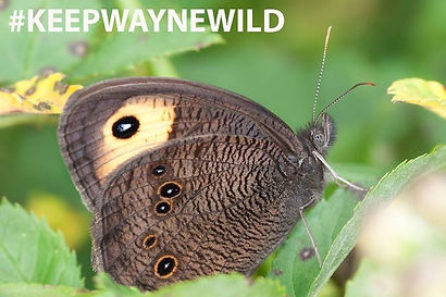 butterfly, moth, wayne national forest photo contest, wildlife