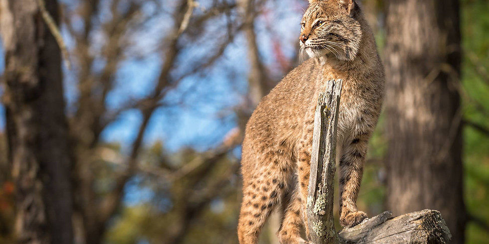 Public Hearing- Stand up for Ohio's Bobcats