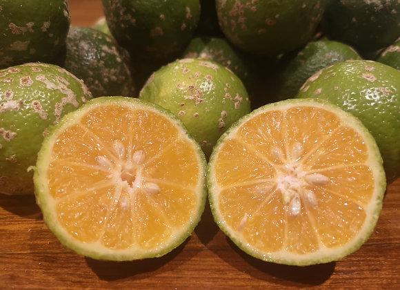 Limão galego (meia dúzia)