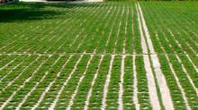 Du Béton Végétalisé : Une Nouveauté pour votre Jardin !