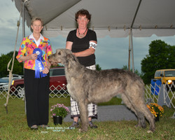 Barrie Kennel and Obedience 2015