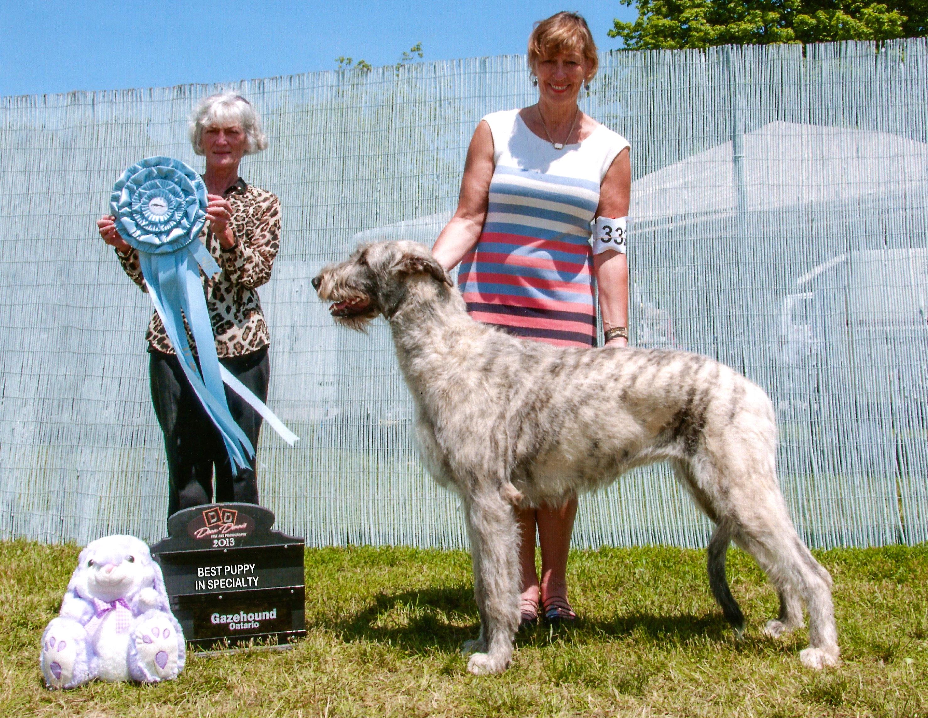 Ontario Gazehound 2013