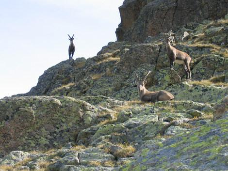 Einwohner der Bergwelt