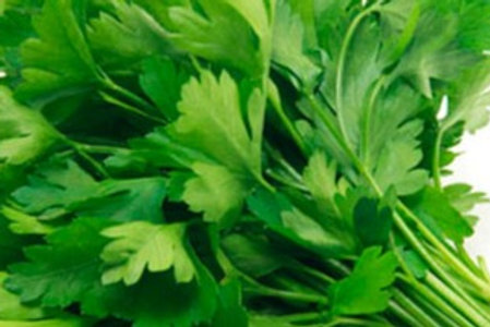 Perejil fresco ecológico - Manojo 20 g