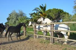 Etape Equestre