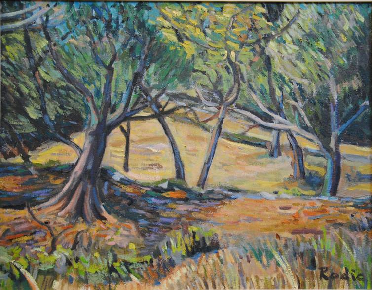 Grandpa's Olive Trees