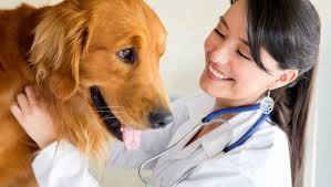 If veterinarians can do it - Why can't you? Creating customer stickiness for a lifetime