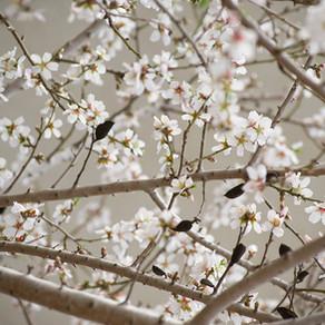 เทศกาลและสถานที่ท่องเที่ยวในฤดูใบไม้ผลิ ของเกาหลี