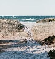 coastal, shoreline, native plants, marsh, tidal