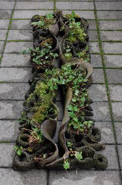2008 「∞+plants」