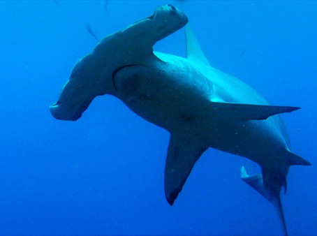 Ecuador is working to stop Shark Finning, and that's a good thing!