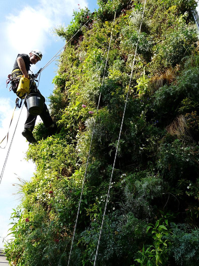 Le jardinier vertical