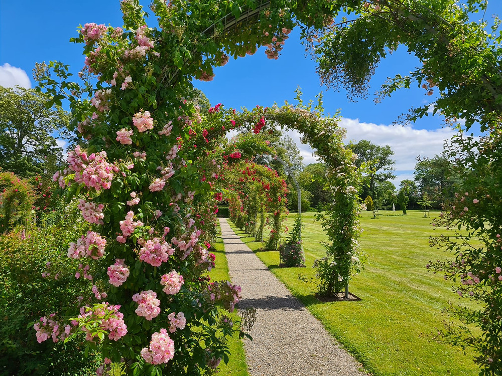 The arch from roses in the garden on Lolland in Denmark where you can have your wedding ceremony if you get married in Denmark