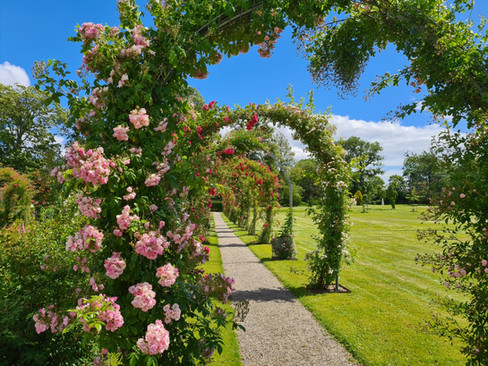 A view of the rose garden at Lolland-Falster, an ideal Denmark wedding venue for small weddings abroad.