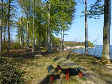 A nature around Falster island.