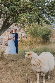 A couple looking at the sheap at their destination wedding abroad on Bornholm island.
